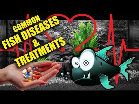 Common Fish Diseases: Identifying & Treatment