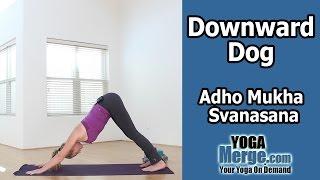 Yoga Pose - Downward Dog or Adho Mukha Svanasana
