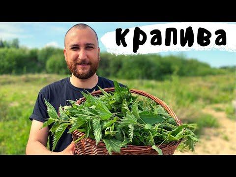 Крапива. 5 рецептов из сорняка