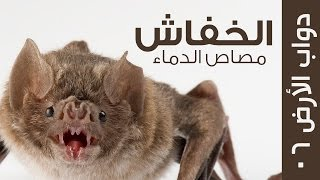 كائن الليل ومصاص الدماء الحقيقي - الخفاش