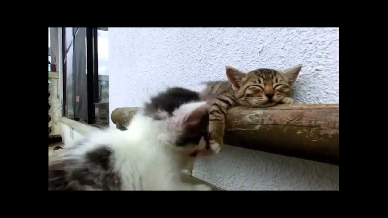 Bu Ne Rahatlık Izlediğim En Güzel Kedi Videosu Youtube