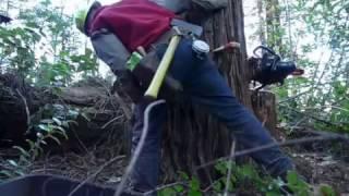 Humboldt Verse Modified Humboldt Undercut