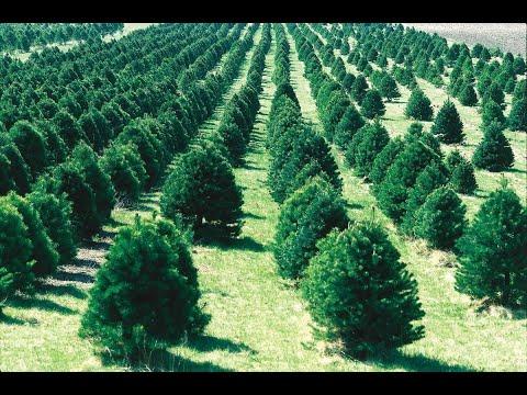 علماء يدعون إلى زراعة مزيد من الأشجار لمكافحة التغير المناخي  - نشر قبل 20 دقيقة
