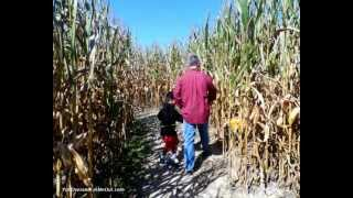 A day in a corn maze