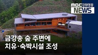 [뉴스리포트]금강송 숲 주변에 산림치유시설 조성/200…