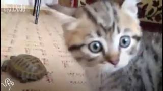 Funny Cats Compilation Most See Funny Cat Videos Ever Part 1 1