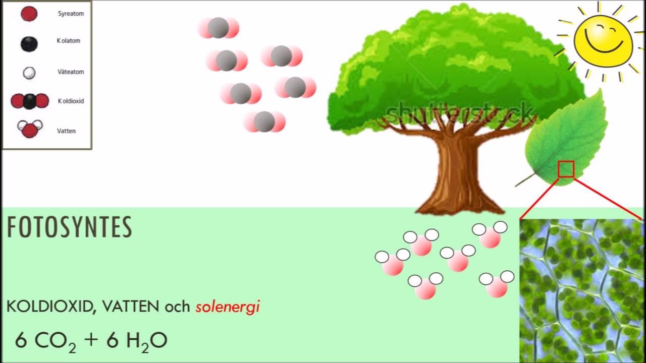 Fotosyntes formel