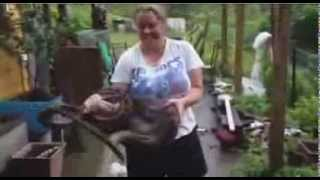 Amazing; 3.5m Snake Eats Pet Dog In Australia... Again