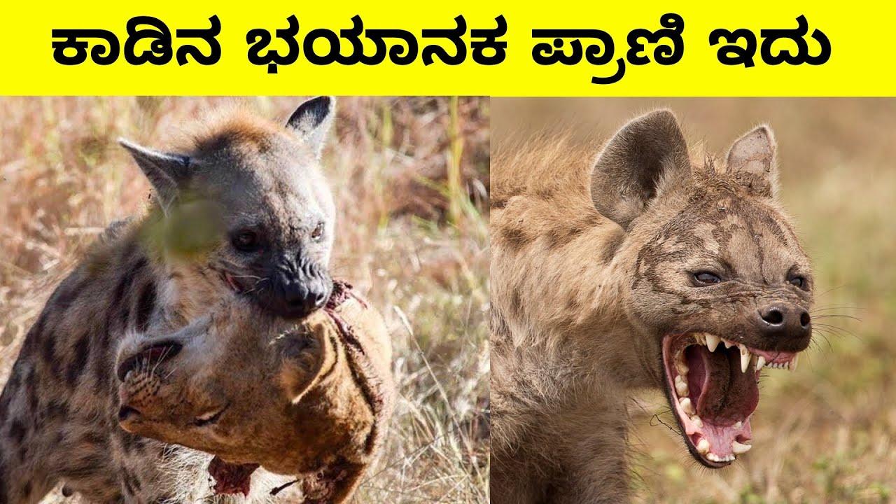 ನೀವು ನಂಬಲಾರದ ಅದ್ಭುತ ಪ್ರಾಣಿಗಳು   You are unbelievably wonderful animals   Mysteries For you Kannada