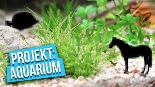 Unsere neuen MITBEWOHNER! - Projekt: Aquarium