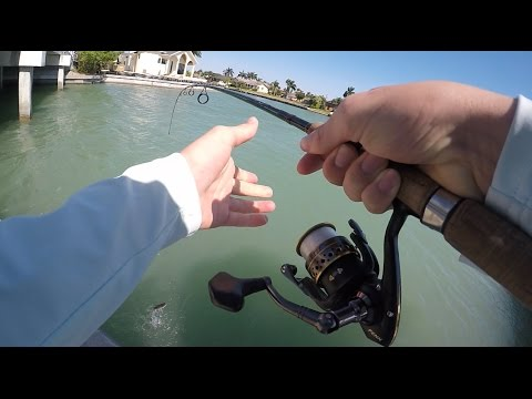 Marco island canal fishing- Florida Fishing Day 1