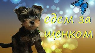 VLOG: Едем за щенком!!!