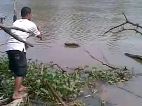 gurame sungai alam