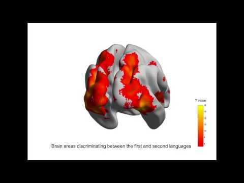 За разные языки отвечают разные нейронные структуры