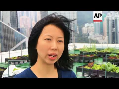 Hong Kong's skyline farms harvest more happiness than food