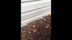 Hidden Danger - Termites in mulch