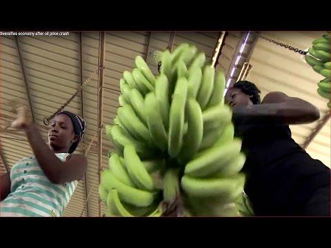 Angola diversifies economy after oil price crash