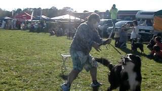 超大型犬がオーナーさんと 一生懸命走ってます。 娘の撮影なのでチョッ...