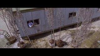 Мне так не хватает этих деревьев ... отрывок из фильма (Дом у озера/The Lake House)2006
