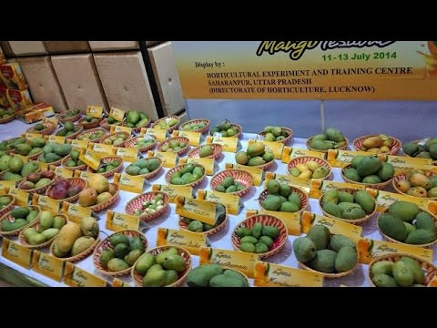 Summer fruits major attraction at Delhi tourism festival