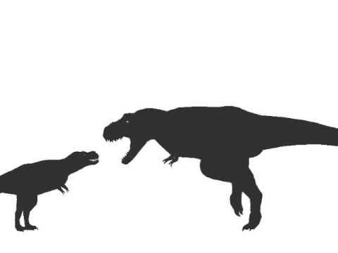 Dinosaur vs Dinosaur - Alioramus vs Tyrannosaurus