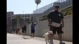 Watch Bruno Work His Dog At Dog Man's Class At The Los Angeles Coliseum