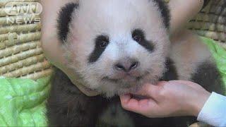 上野動物園で、ジャイアントパンダの赤ちゃんの名前が「シャンシャン」...
