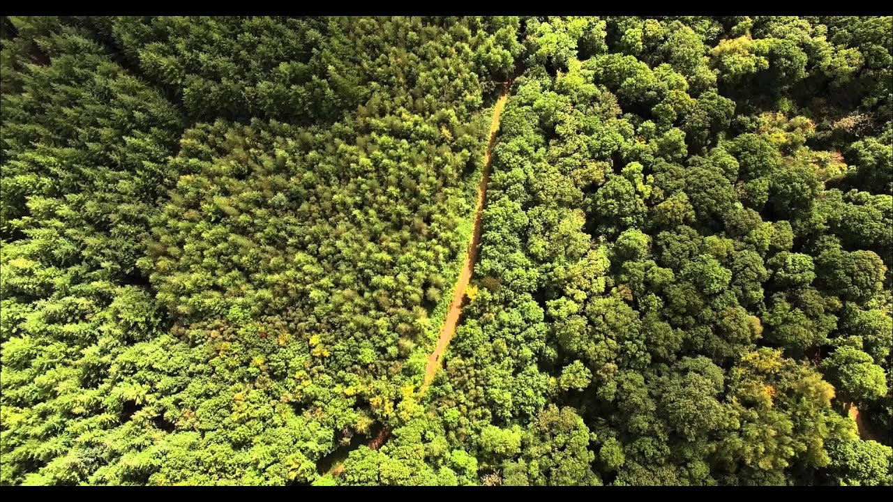 Ashclyst Forest Via Drone 4K