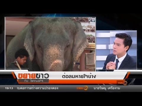 ย้อนหลัง ขยายข่าว : ต่อลมหายใจช้าง