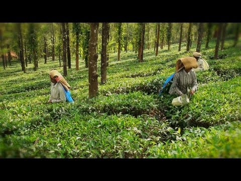 Tea County - an accommodation provider at Manathavady, Wayanad