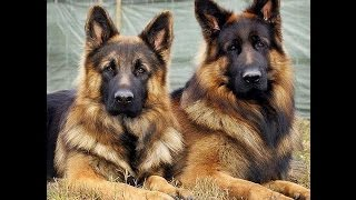 Собаки.  кошки на службе в армии. Прикольные фото.