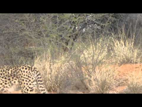 cheetah walk | Namibia Health and Fitness Retreat
