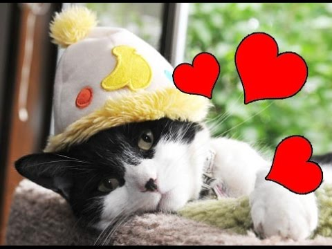 Dites je t 39 aime en musique avec des chats rigolos - Dessins de chats rigolos ...