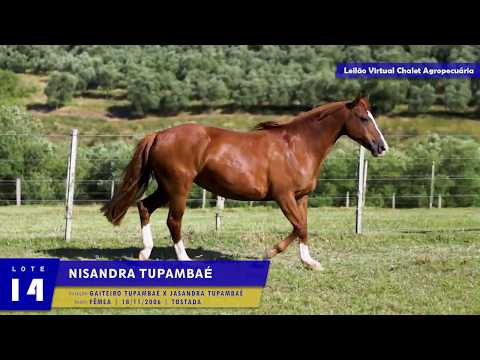 LOTE 14 - Nisandra Tupambaé