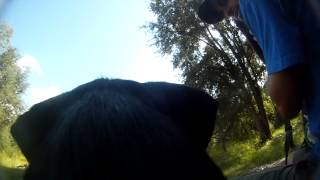 Duck Hunt Training - Dog Head Cam Pov