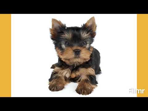 Top 5 small dog 🐕 breeds