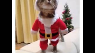 Le chat Noël