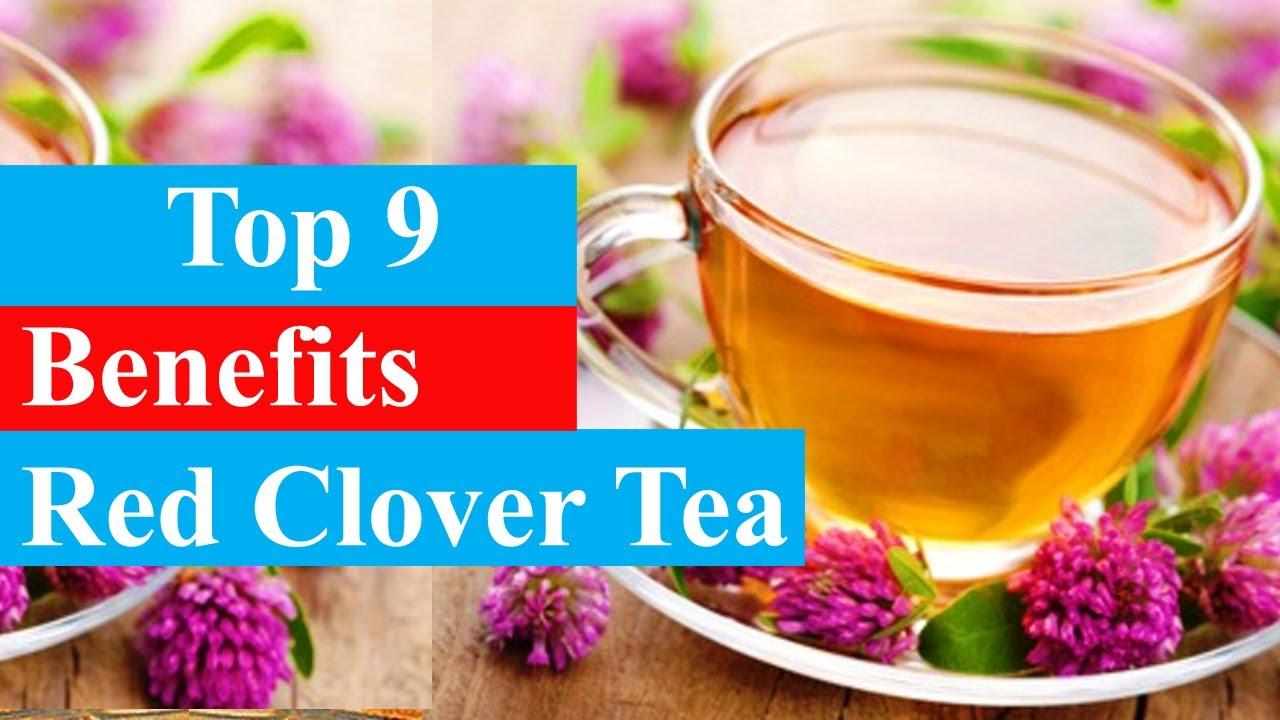Top 9 Benefits Of Red Clover Tea Health Benefits Smart Your