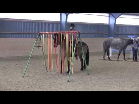 Trygg häst när du rider.
