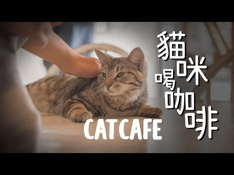 Christchurch Coffee Shop | Students Checking Out The Catnap Cafe | New Zealand Life | DayMixer混日子