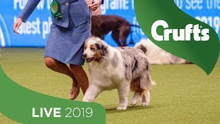 Crufts 2019 Day 3  Part 1 LIVE