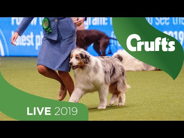 Crufts 2019 Day 3 - Part 1 LIVE