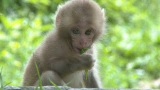 My Recommended Video 【SNOW MONKEY】 ☆Cute Snow Monkey Babies☆ ニホ...