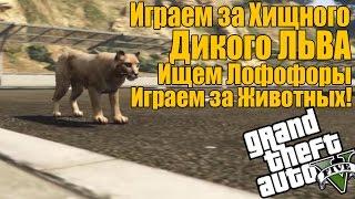 GTA 5 - Играем за Хищного Дикого ЛЬВА [Играем за животных + Ищем Лофофоры]