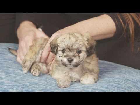 30-Minute Puppy Massage