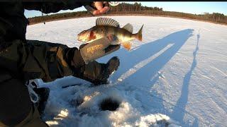 Зимняя рыбалка на окуня и плотву Ловим на мормышку гвоздешарик