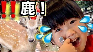 【奈良公園】鹿せんべい大量に購入した結果