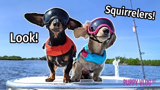 Ep#9: The Dogs Go to Florida, Find SQUIRRELERS! - Cute Puppy Vlog