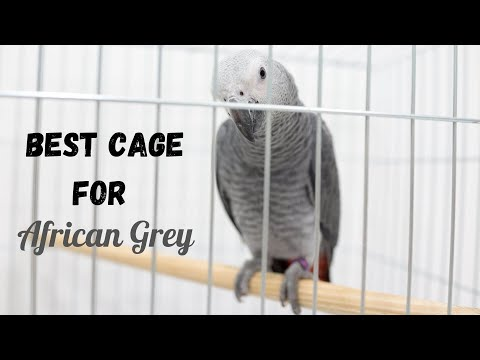 Best Cage for African Grey - Top 5 Reviews of 2020