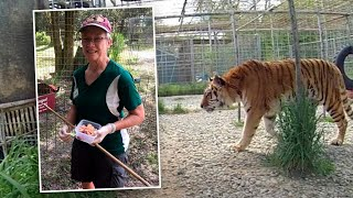 Big Cat Rescue tiger bite: Volunteer nearly loses arm
